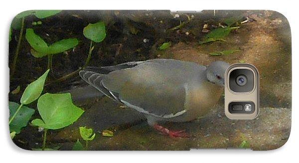 Galaxy Case featuring the photograph Pigeon by Felipe Adan Lerma
