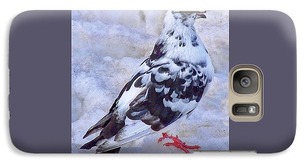 Galaxy Case featuring the photograph Pigeon On Ice  1 by John Selmer Sr