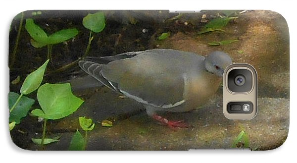 Galaxy Case featuring the photograph Pigeon Poster by Felipe Adan Lerma