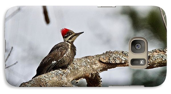 Galaxy Case featuring the photograph pileated Woodpecker 1068  by Michael Peychich
