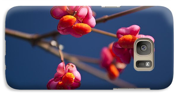 Galaxy Case featuring the photograph Pink Spindle Fruit by David Isaacson