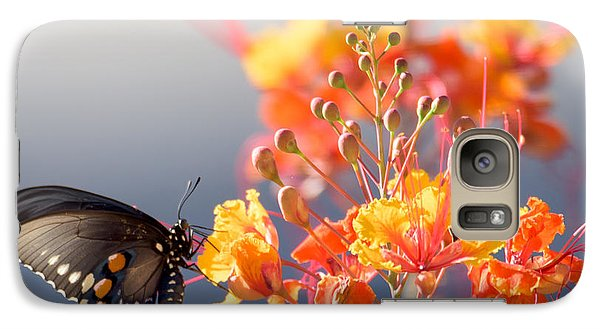 Galaxy Case featuring the photograph Pipevine Swallowtail by Dan McManus