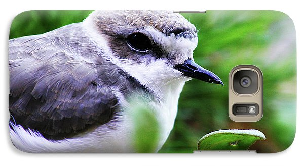 Galaxy Case featuring the photograph Piping Plover by Anthony Jones