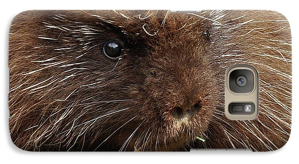Galaxy Case featuring the photograph Porcupine by Glenn Gordon