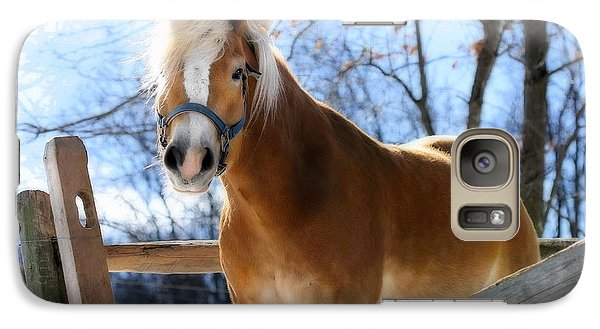 Galaxy Case featuring the photograph Portrait Of A Haflinger - Niko In Winter by Angela Rath