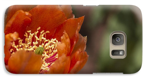 Galaxy Case featuring the photograph Prickly Pear Bloom by Laura Pratt