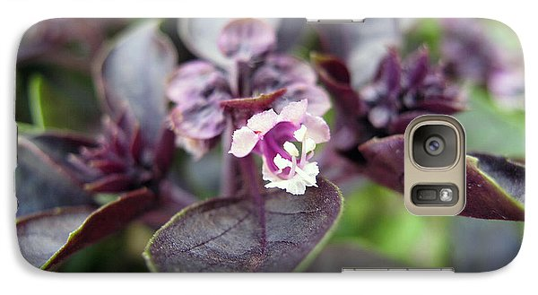 Galaxy Case featuring the photograph Purple In Autumn by Joan  Minchak