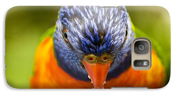 Rainbow Lorikeet Galaxy S7 Case by Avalon Fine Art Photography