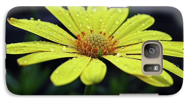 Galaxy Case featuring the photograph Raindrops On Daisy by Judy Vincent