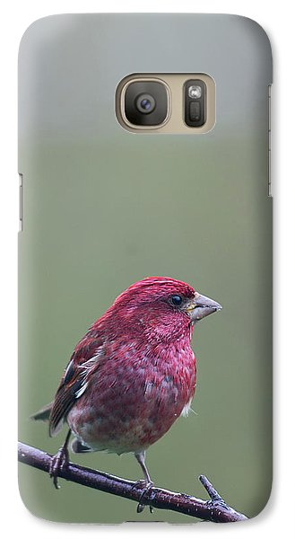 Galaxy Case featuring the photograph Rainy Day Finch by Susan Capuano