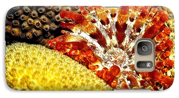 Galaxy Case featuring the photograph Rare Orange Tipped Corallimorph - Fire In The Sea by Amy McDaniel