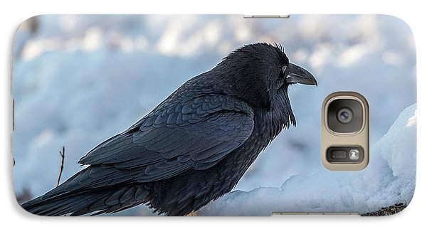 Galaxy Case featuring the photograph Raven by Paul Freidlund