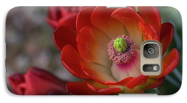 Galaxy Case featuring the photograph Red Beauty  by Saija Lehtonen