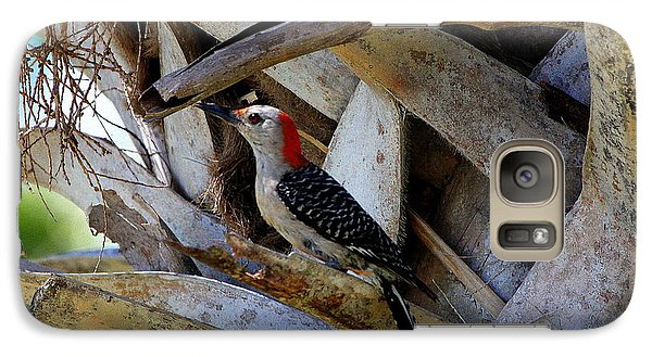 Galaxy Case featuring the photograph Red-bellied Woodpecker Hides On A Cabbage Palm by Barbara Bowen