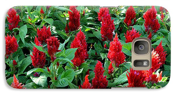 Galaxy Case featuring the photograph Red Celosia Garden by Glenn McCarthy Art and Photography