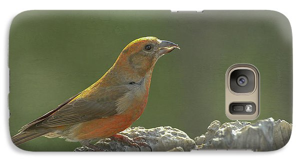 Red Crossbill Galaxy Case by Constance Puttkemery