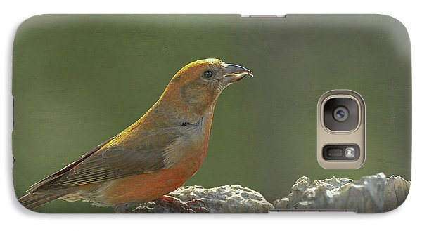 Crossbill Galaxy S7 Case - Red Crossbill by Constance Puttkemery