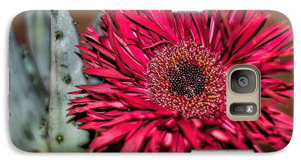 Galaxy Case featuring the photograph Red Daisy And The Cactus by Diana Mary Sharpton