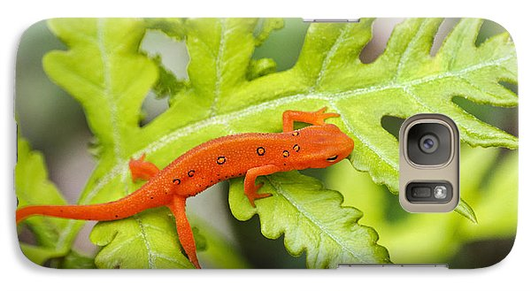 Red Eft Eastern Newt Galaxy S7 Case by Christina Rollo