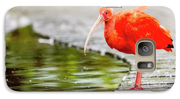 Galaxy Case featuring the photograph Red Ibis by Alexey Stiop