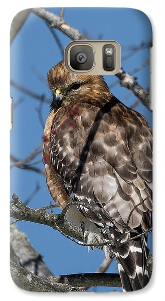 Galaxy S7 Case featuring the photograph Red Shouldered Hawk 2017 by Bill Wakeley