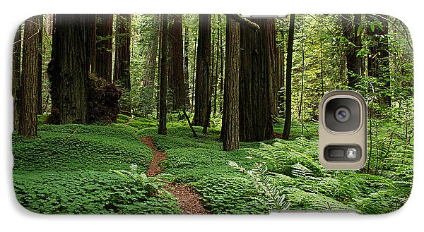 Redwood Forest Path Galaxy S7 Case by Melany Sarafis