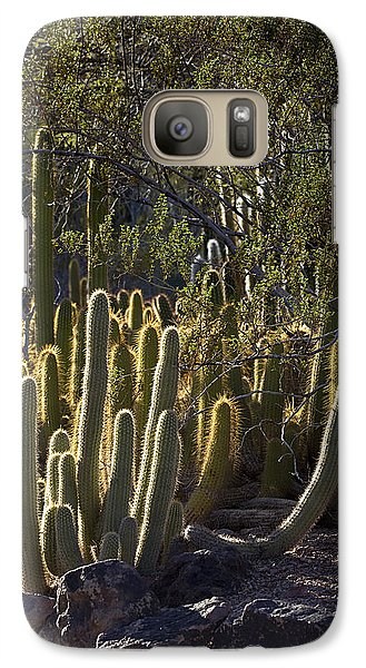 Galaxy Case featuring the photograph Reflecting The Sunshine by Phyllis Denton