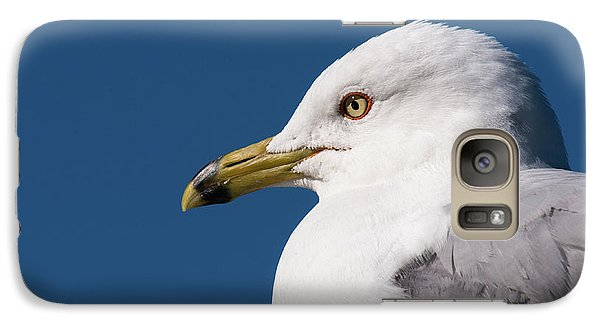 Ring-billed Gull Portrait Galaxy S7 Case