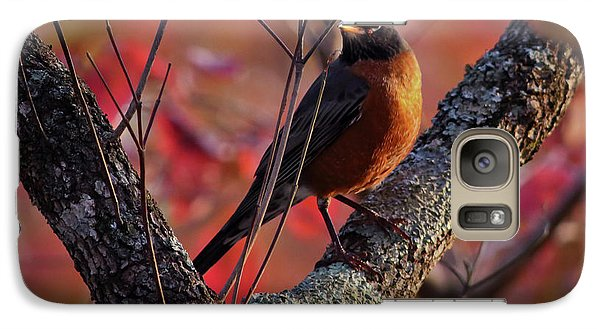 Galaxy Case featuring the photograph Robin In The Dogwood by Douglas Stucky