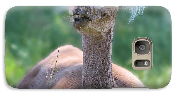 Llama Galaxy S7 Case - San Juan Alpaca Shear Heaven by Betsy Knapp