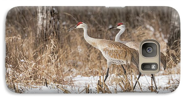 Galaxy Case featuring the photograph Sandhill Crane 2016-4 by Thomas Young