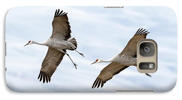 Sandhill Crane Approach Galaxy S7 Case by Mike Dawson