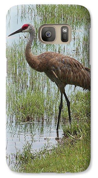 Crane Galaxy S7 Case - Sandhill In The Marsh by Carol Groenen