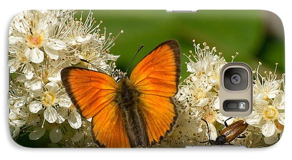 Galaxy Case featuring the photograph Scarce Copper 2 by Jouko Lehto