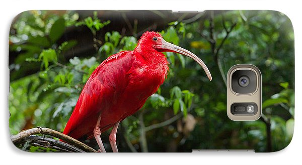 Scarlet Ibis Galaxy S7 Case by B.G. Thomson