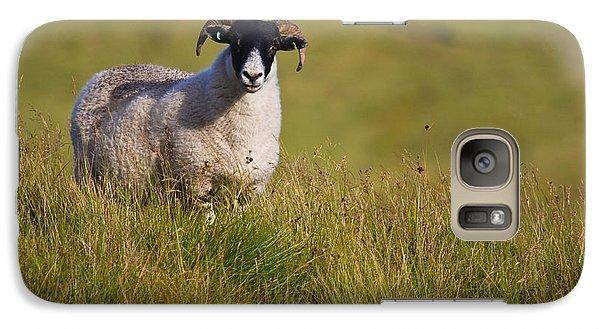 Galaxy Case featuring the photograph Scottish Blackface Sheep On Green Field by Gabor Pozsgai