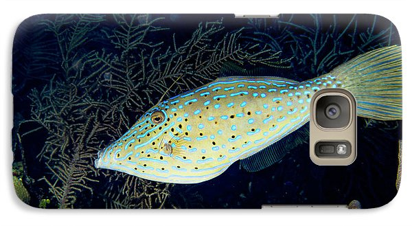 Galaxy Case featuring the photograph Scrawled Filefish by Jean Noren