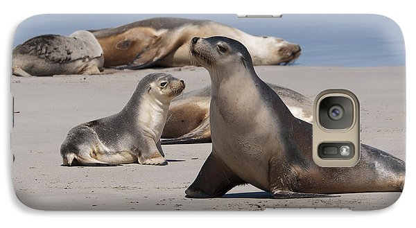 Galaxy Case featuring the photograph Sea Lions by Werner Padarin