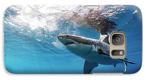 Shark Rays Galaxy S7 Case by Shane Linke