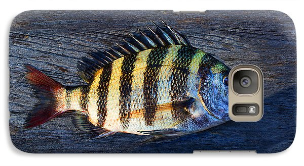 Galaxy Case featuring the photograph Sheepshead Fish by Laura Fasulo