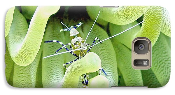 Galaxy Case featuring the photograph Shrimp And The Anemone by Amy McDaniel