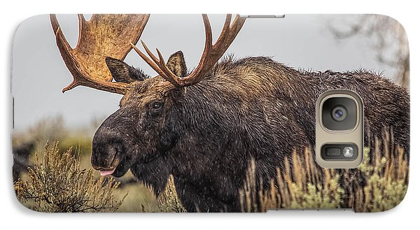 Galaxy Case featuring the photograph Silly Moose  by Kelly Marquardt