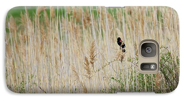 Galaxy Case featuring the photograph Sing For Spring by Bill Wakeley