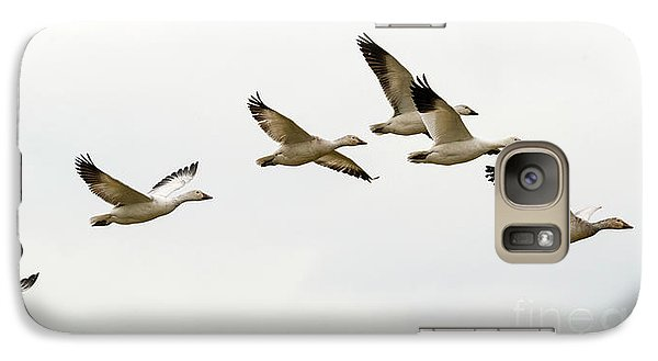 Galaxy Case featuring the photograph Six Snowgeese Flying by Mike Dawson