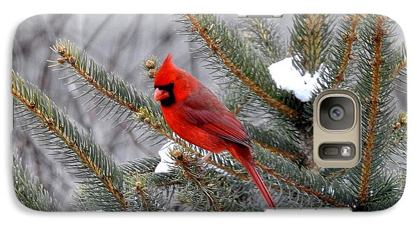 Galaxy Case featuring the photograph Sleeping Cardinal by Brenda Bostic
