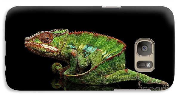 Sneaking Panther Chameleon, Reptile With Colorful Body On Black Mirror, Isolated Background Galaxy S7 Case by Sergey Taran