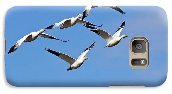Galaxy Case featuring the photograph Snow Geese Flormation by Elvira Butler