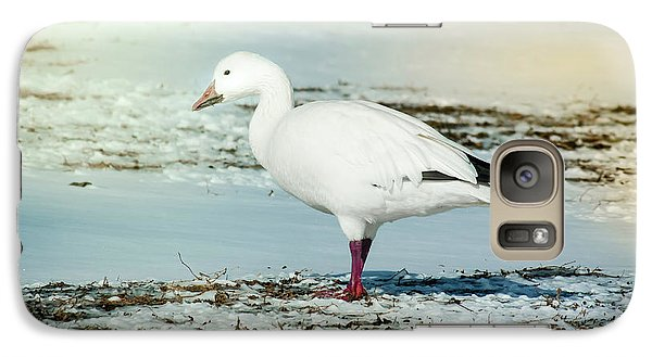 Galaxy Case featuring the photograph Snow Goose - Frozen Field by Robert Frederick