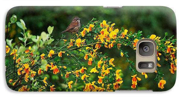 Song Sparrow Bird On Blooming Scotch Galaxy S7 Case by Panoramic Images