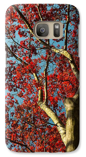 Galaxy Case featuring the photograph Spring Maple by Dana Sohr